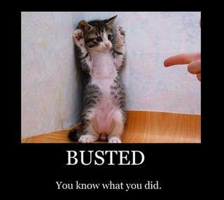 cheater cat