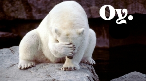 Polar bear OY