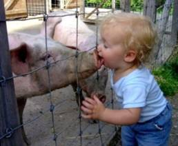 girl-kissing-pig