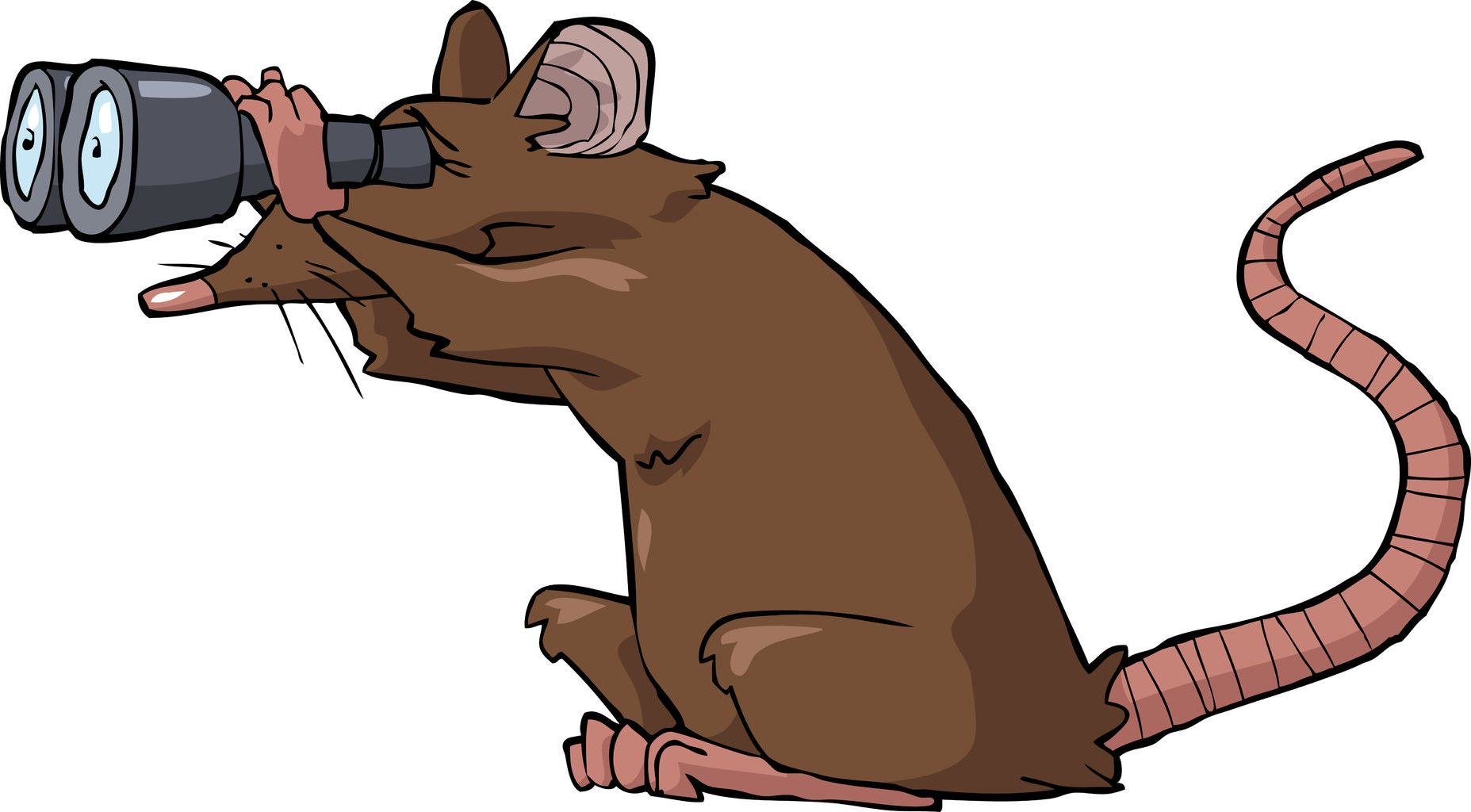 Image result for rat with binoculars